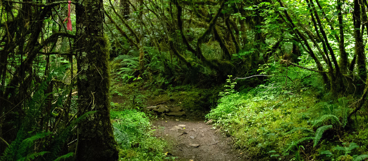 Trailblazing: How To Create Your Own Path