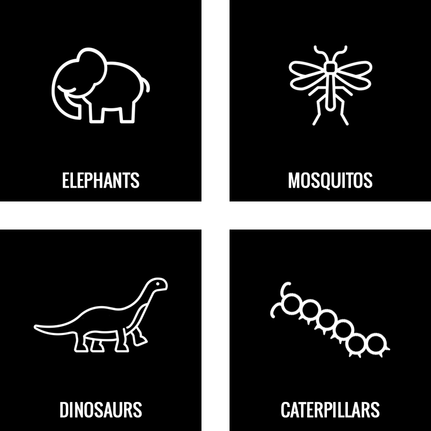 ideaAnimals